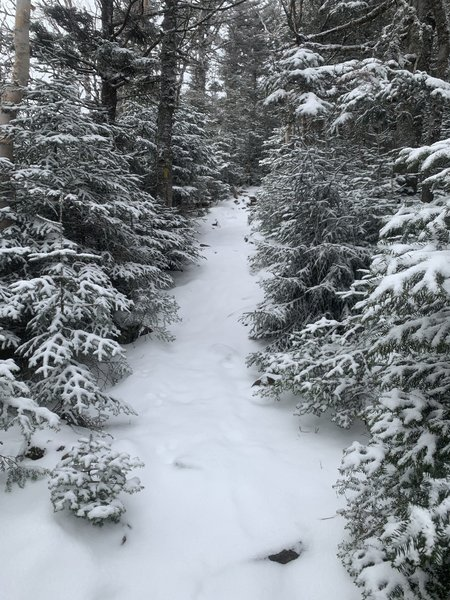 Snowy trail to Mt. Hale