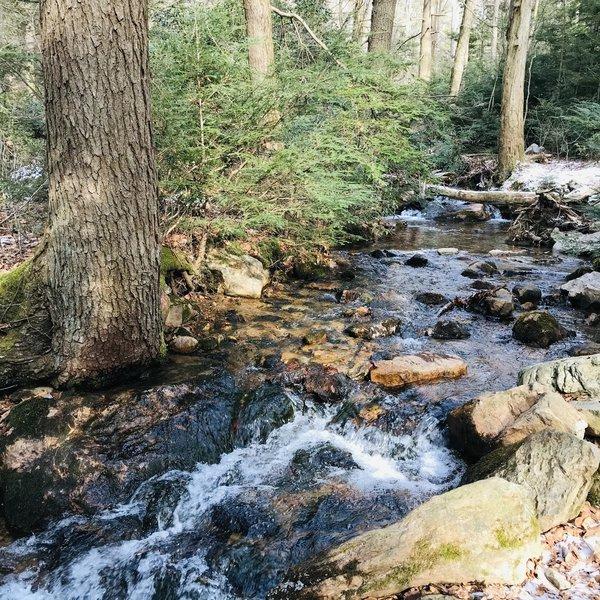 Small stream next to Furnace Creek Trail.