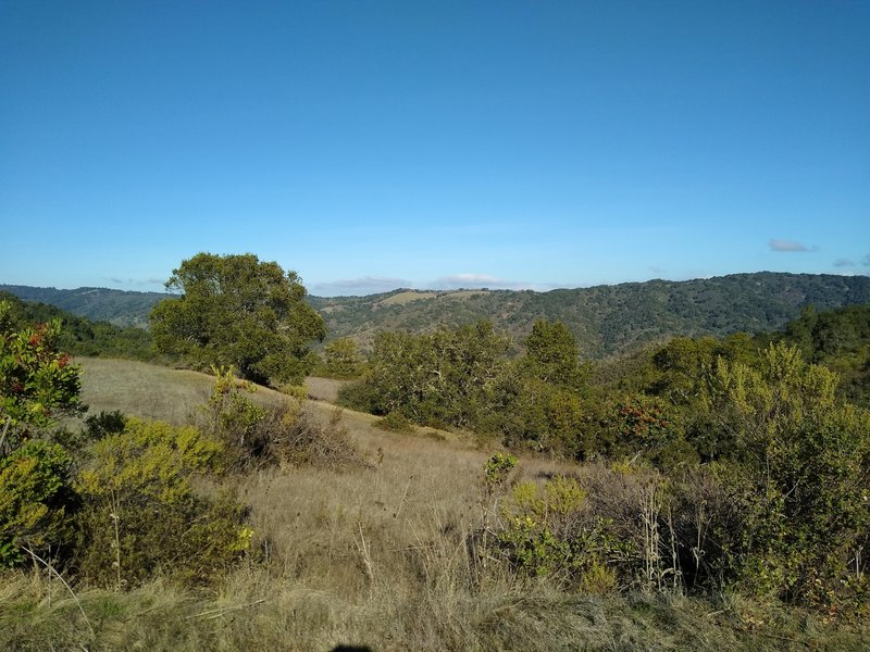 Surrounding forested hills and meadows to the north, high on Merry-Go-Round Trail.