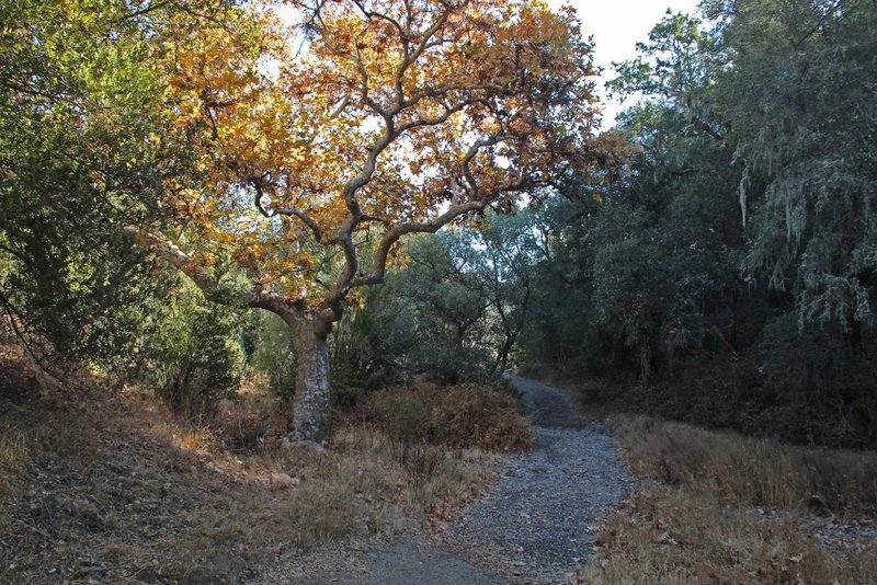 Sycamore trees grow along the creek. The road and creek intertwine so you'll have to wade the creek when there is water in the winter and spring.