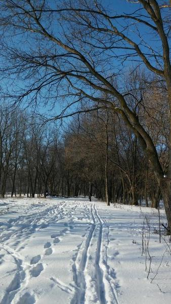 Ski tracks and hiking tracks into the woods.