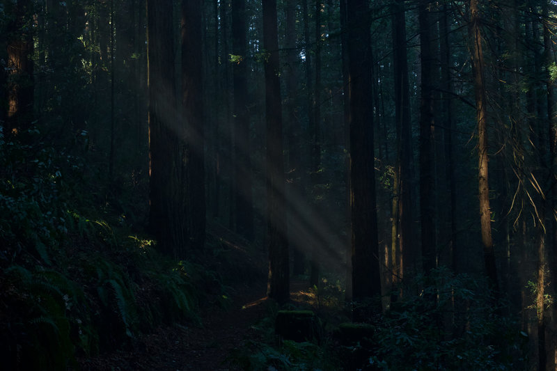 Sunlight breaks through the forest and acts like a natural spotlight along the Bald Knob Trail in the morning.