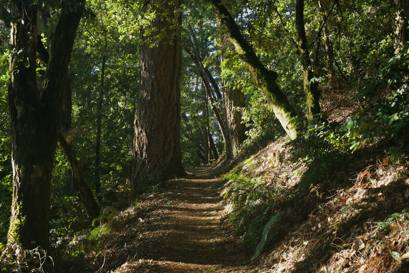 The trail starts to level out as it reaches the ridge and provides a nice shaded walk any time of the day.