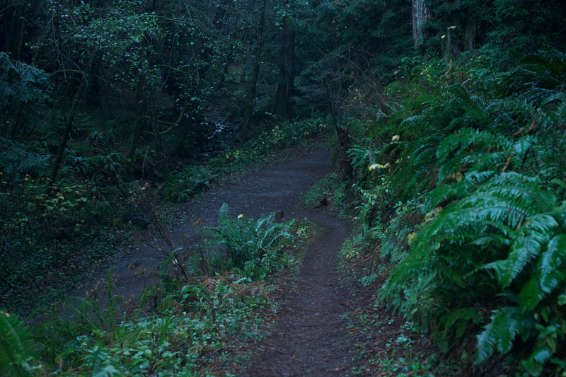 The Grabtown Gulch Trail as it joins up with the Purisima Creek Trail.