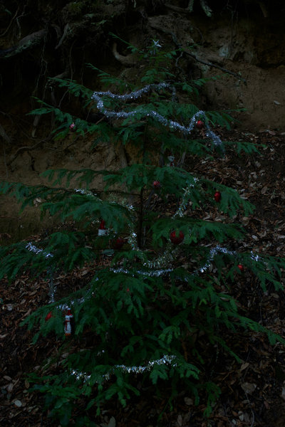 A tree decorated with Christmas Decorations along the trail. Locals clean it up after the Christmas season is over.