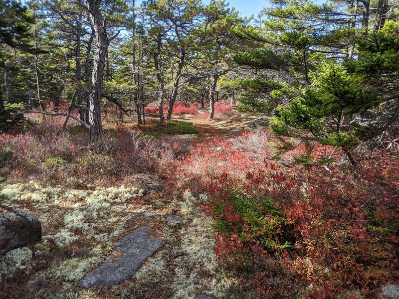 Fall colors at northeastern tip of trail
