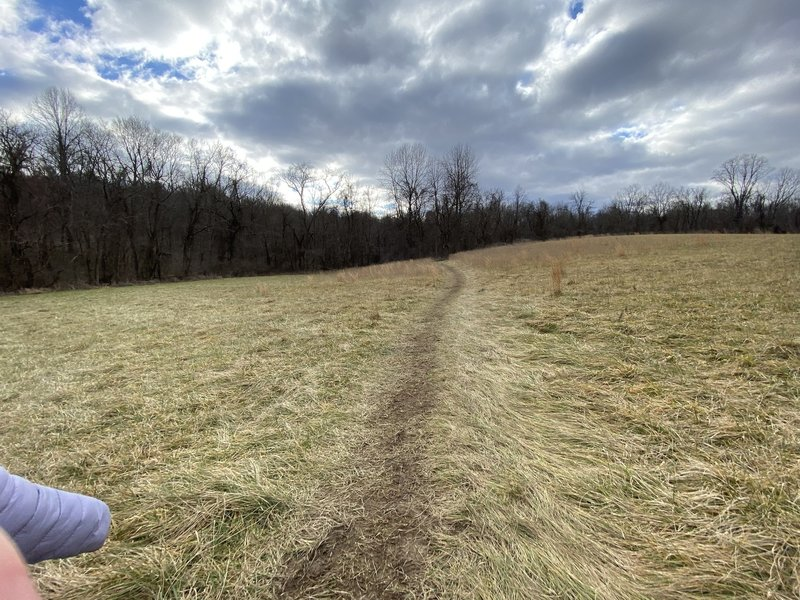 A flat area of grass on the trail.