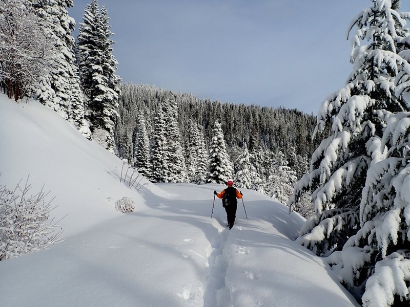 Breaking trail through fresh powder on the Bull Gap Lower Trail.