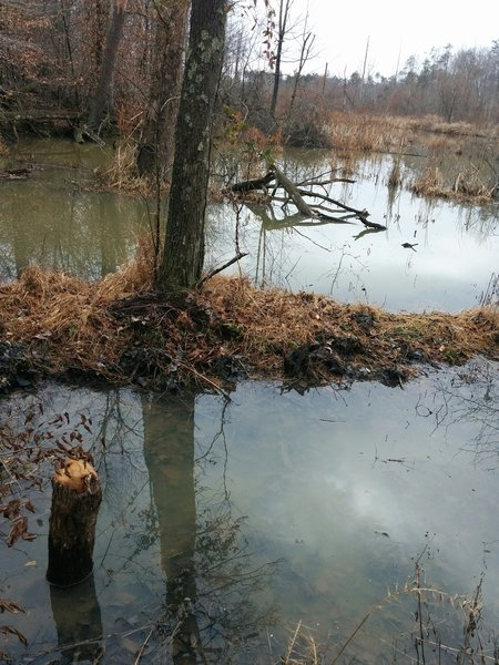 Beaver pond off the trail.
