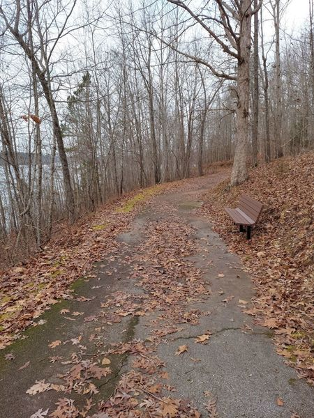 Bench along the trail.
