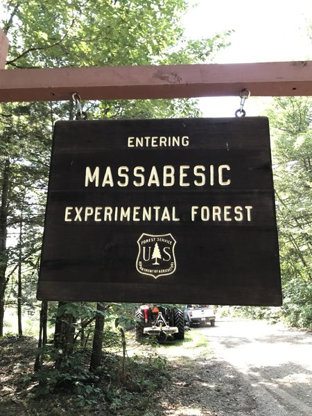 Massabesic Experimental Forest just before we start to mow.