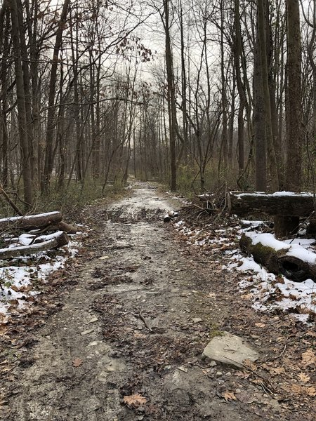 Main trail with a bit o mud
