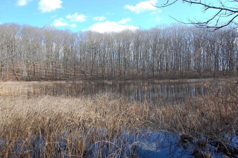 Stump Pond