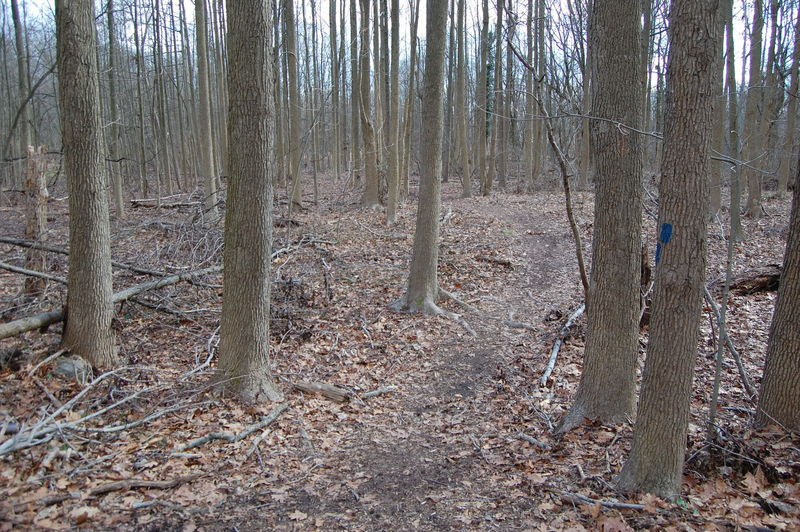 Unmarked trail connecting Greenbelt (Blue Blaze) to NYDEC St Francis Woodlands.