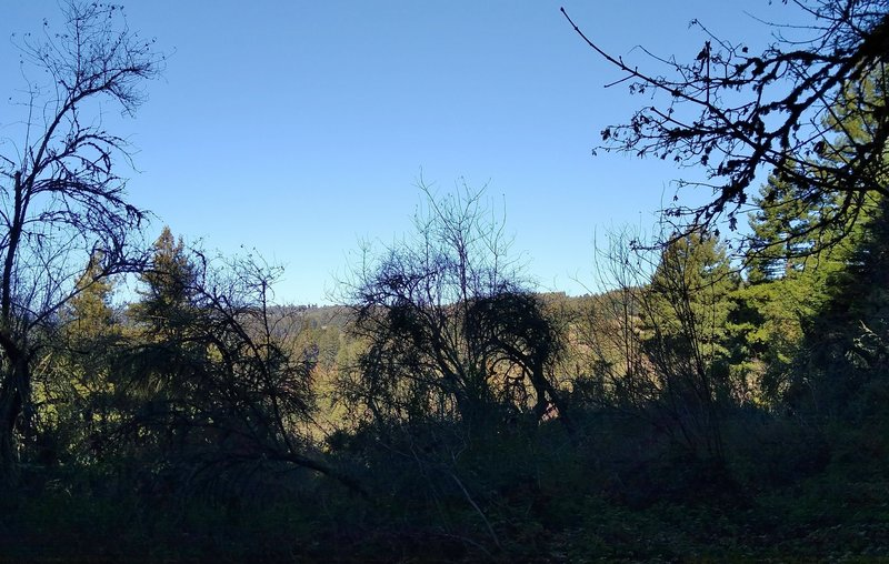 A glimpse of the surrounding Santa Cruz Mountains, looking northwest from Bayview Trail.