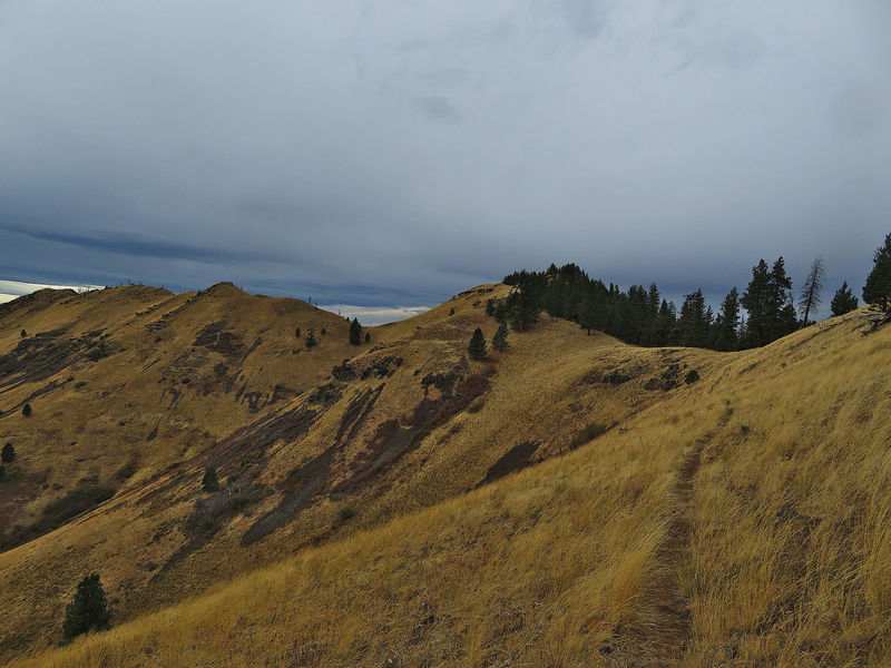 Looking toward Wildhorse Ridge.