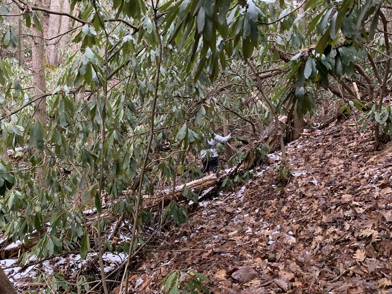 Rube Rock being incredibly overgrown, Jan 2021
