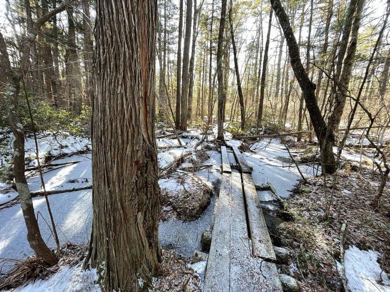 Bridges though the white cedar swamp.