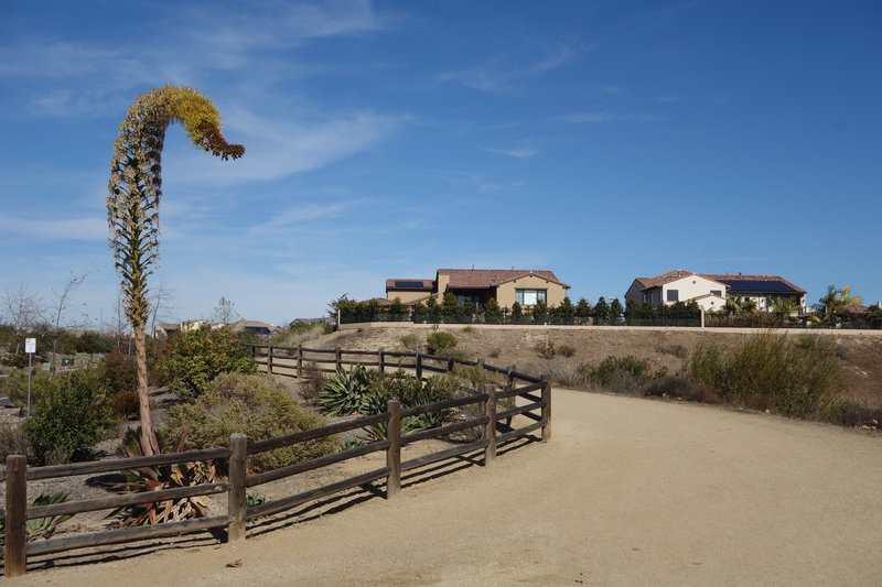 Del Mar Mesa Equestrian trail.