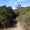 Near the bottom of the Intestine trail.
