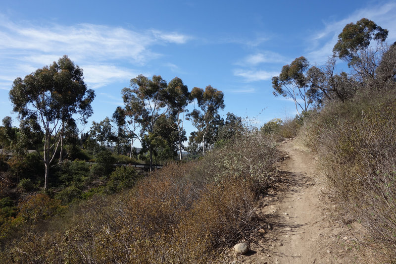 Climbing out of the Intestines trail