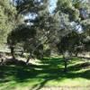 A verdant patch along the Pamo River Trail