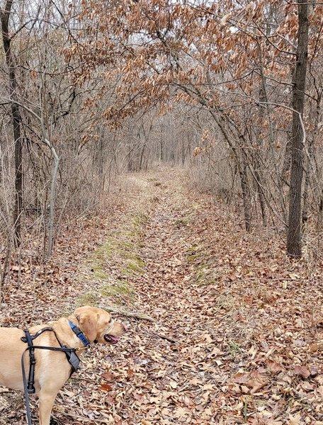 The entry trail for the Shin-Ga-Wa-Sa Nature Trail.