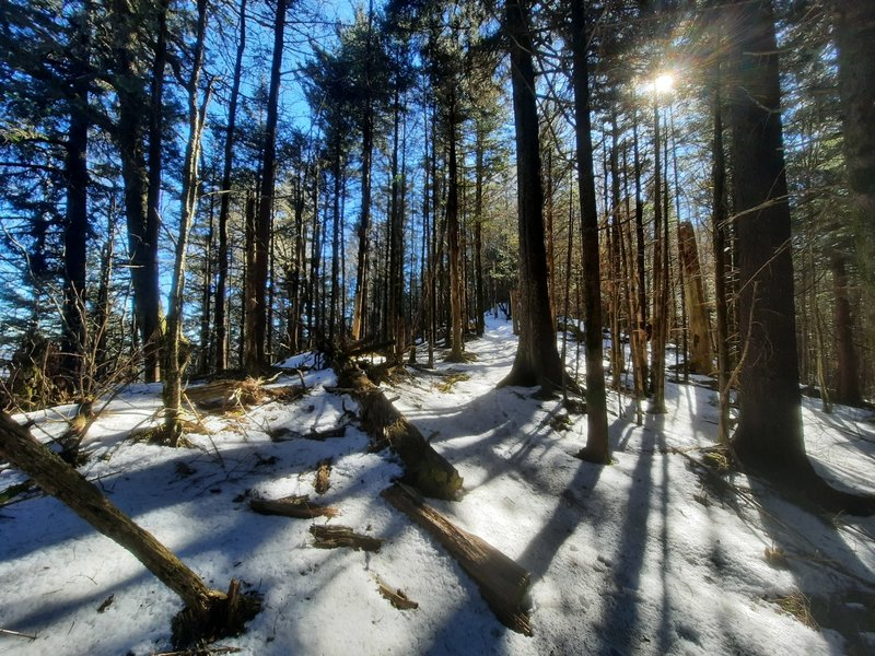A typical January scene on the Tricorner Knob-Gunter Fork segment of the trail.