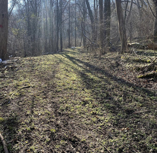 Old road portion of trailhead