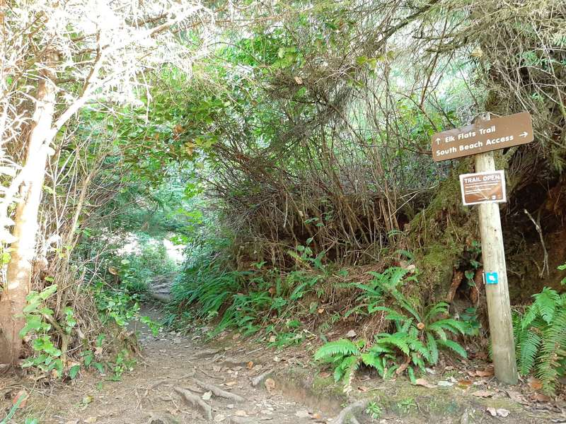 A trailhead sign next to a muddy track that goes uphill through tall salal and brush.