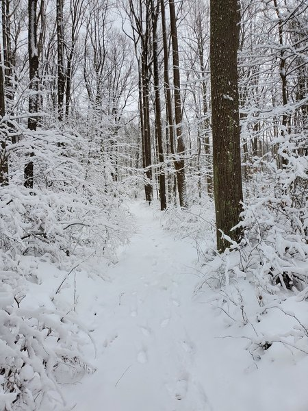 The advanced ski trail, part of the grand loop. about 6 inches of snow.