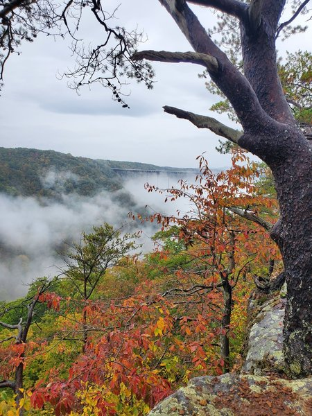 A typical West Virginia fall day, wet and foggy!