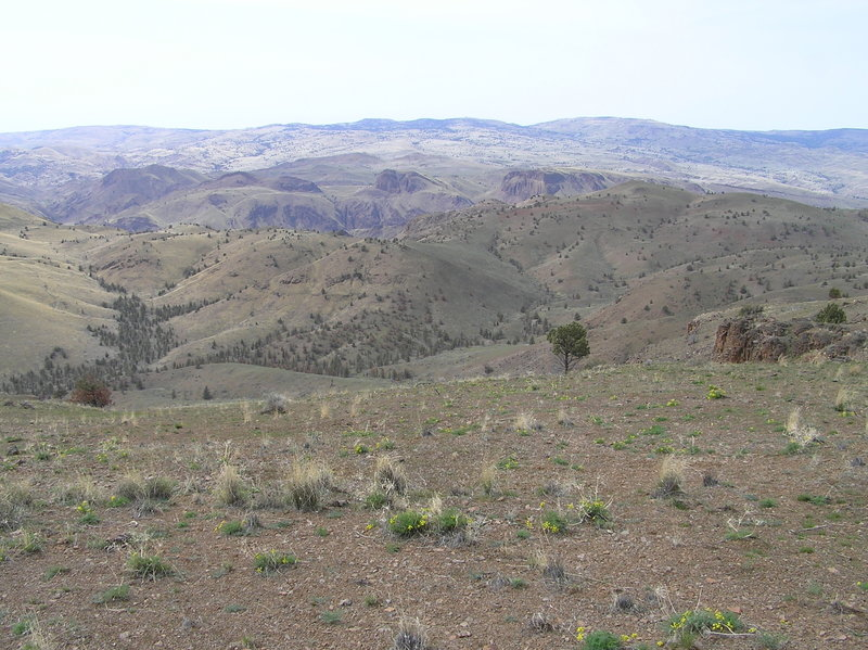 View west from Horse Mountain summit.