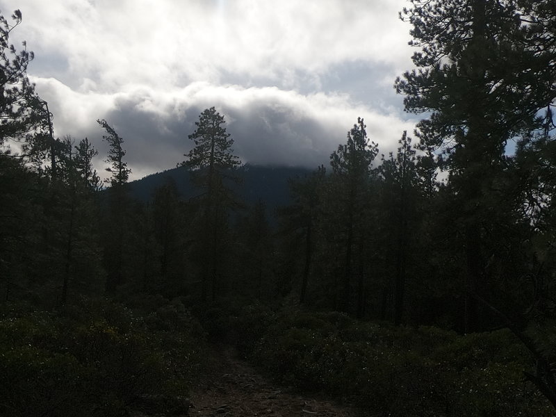 Snow storm on Black Butte from Green Ridge Trail (2-14-2020).