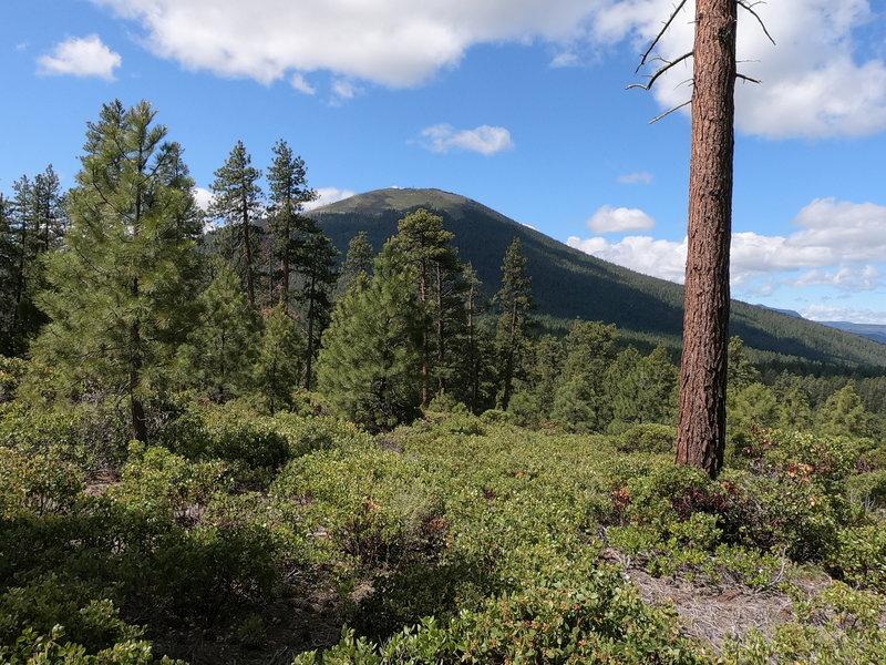 Black Butte from Green Ridge Trail