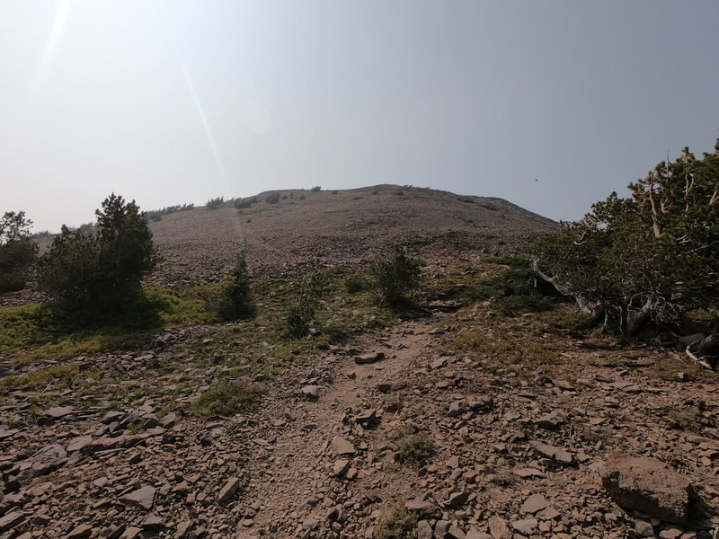 Short (but steep) Summit Trail to top of Strawberry Mountain across scree slopes.