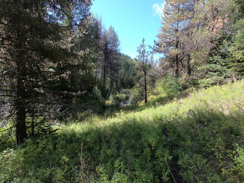Trail along Rock Creek