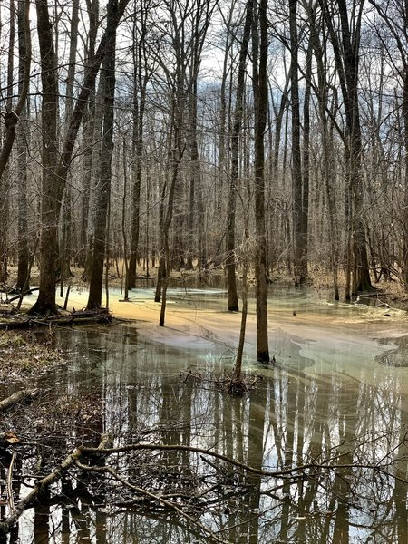Small swamp off the side of the trail produces some great visuals in the afternoon.