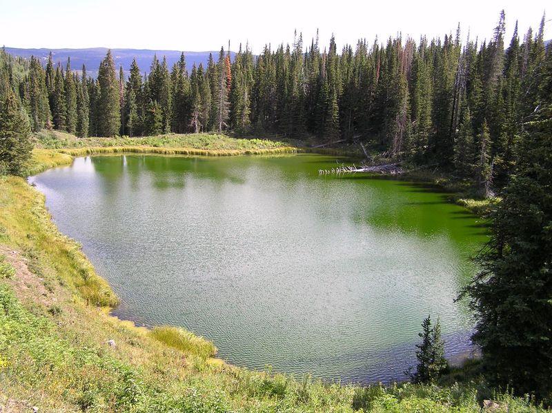 Shamrock Lake