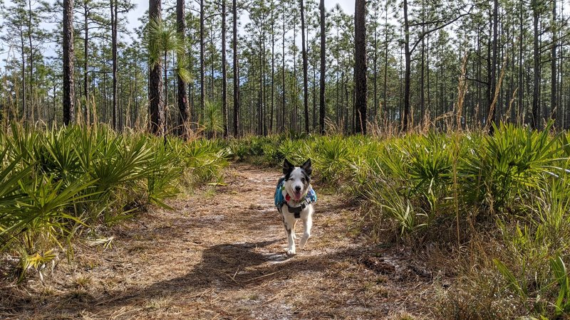 My dog enjoyed the well maintained path for the first mile.