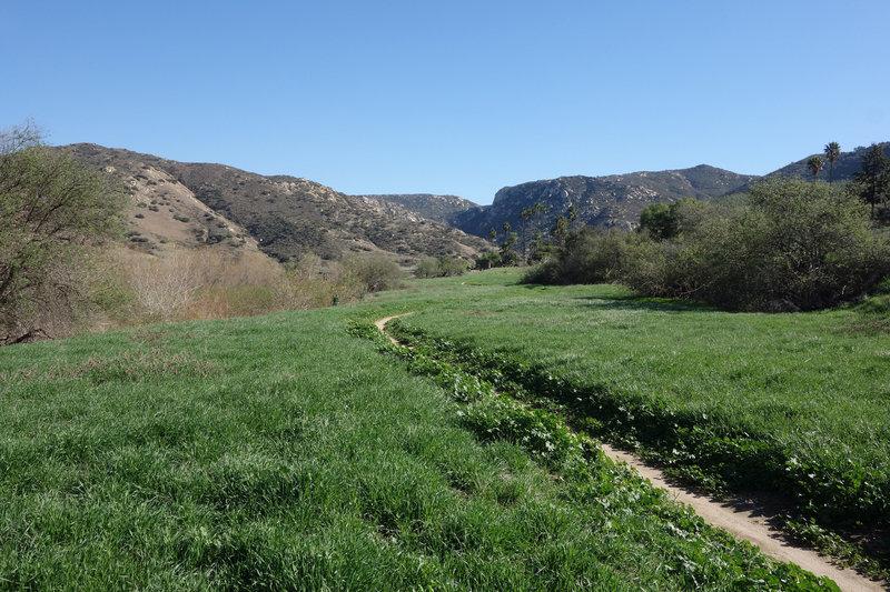 Verdant section of the Raptor Ridge trail near Bandy Canyon Road.