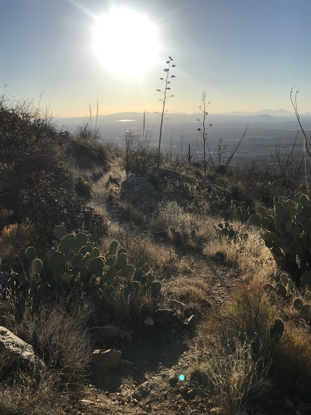 Looking down-trail towards Tucson.