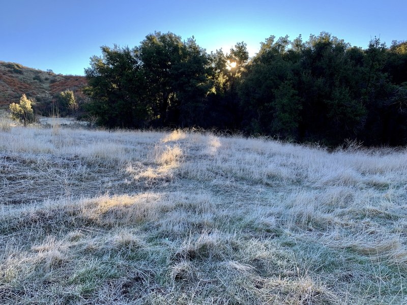 Meadow at morning sunrise one hundred feet from the spring.