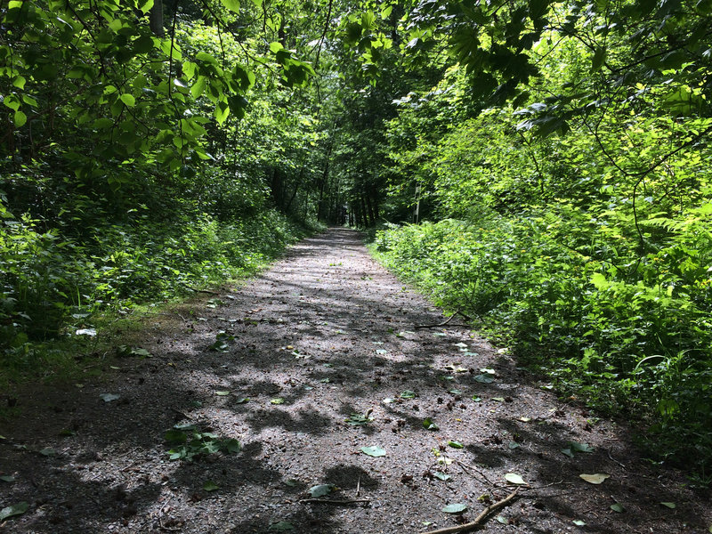 Cleveland Trail North on the Iva Mann Walk at Pacific Spirit Park, Vancouver BC, May 24, 2017