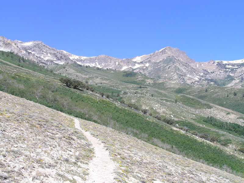 Looking up at Ruby Mountains from Overland Lake Trail.