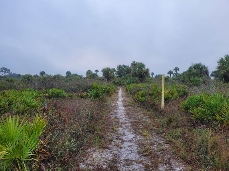 Palmetto Pines Trail at Hickey's Creek Mitigation Park.