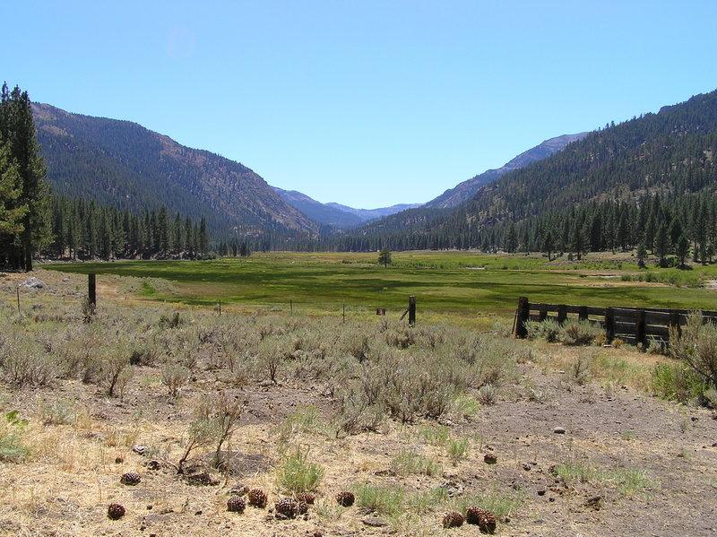 Wolf Creek Meadows (near trailhead).