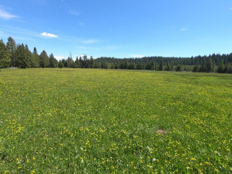 Trail Meadow on 06-02-2020 (west of North Twin Pillars Trailhead).