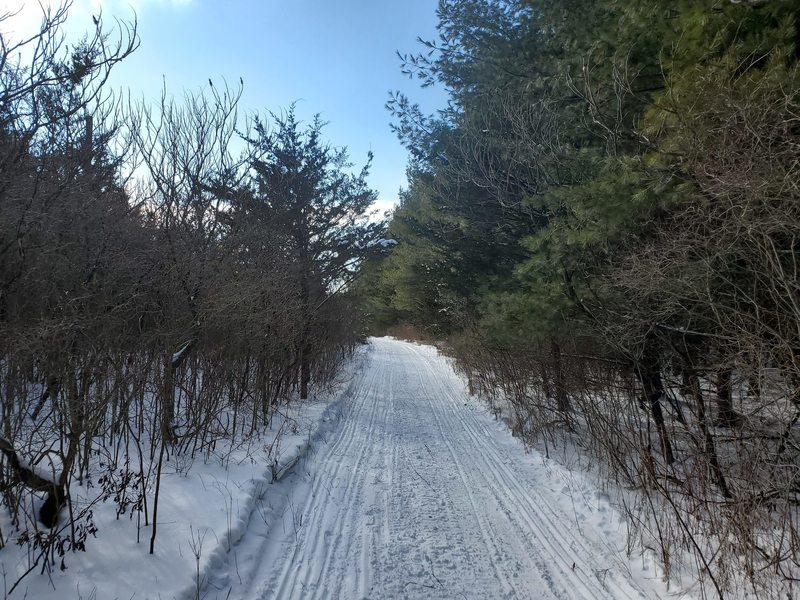 Main Lost Lake trail in winter with snowmobiling tracks.