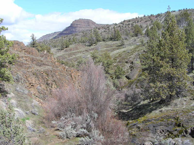 Exit from brush-choked section about 1 1/2 miles from trailhead (04-12-2019)
